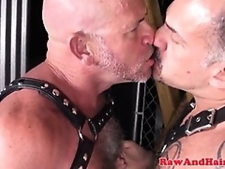Bareback (Gay),Bears (Gay),Blowjob (Gay),Cumshot (Gay),Fetish (Gay),Gays (Gay),HD Gays (Gay) Barebacked silver...
