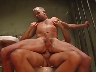 Gay Porn (Gay);Muscle (Gay);Farm Stud farm